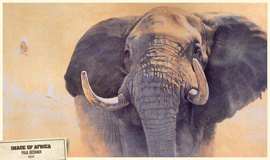 Image of Africa. Paul Bosman. Giclee.